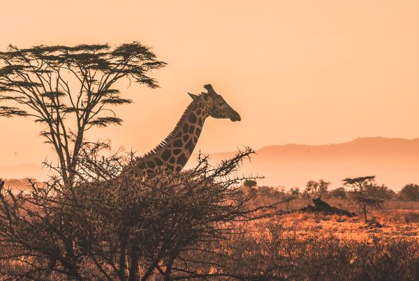 Agile Safari bei der metafinanz