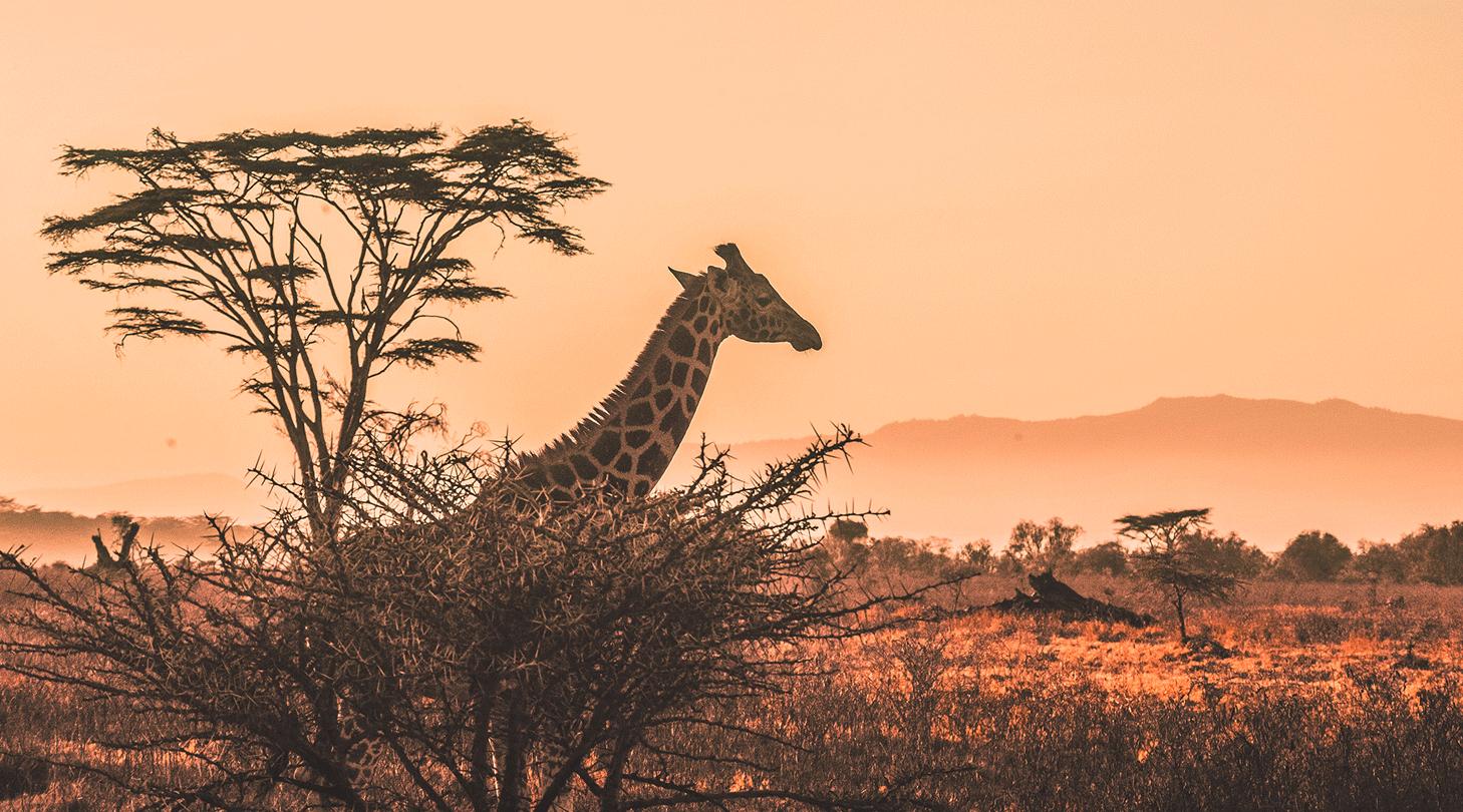 Agile Safari: New Work hautnah erleben